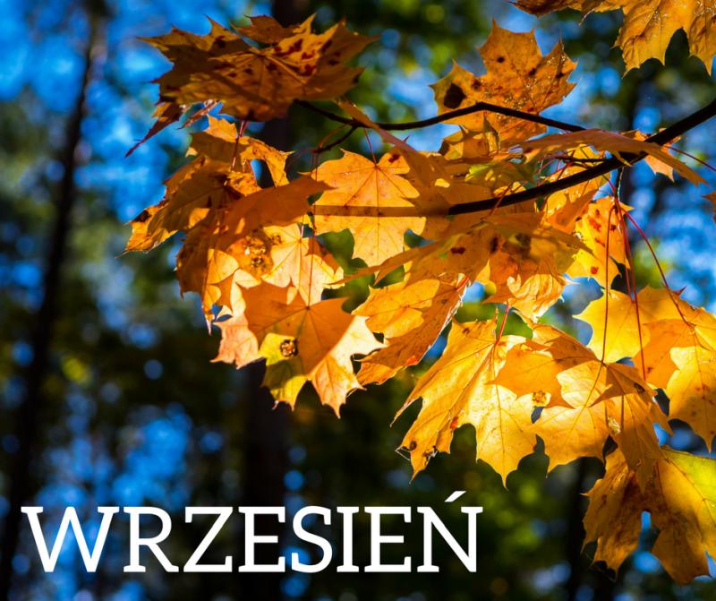 Ogłoszenia na Wrzesień- Żłobek