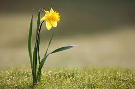 Ogłoszenia na miesiąc kwiecień- żłobek