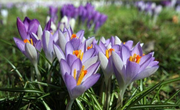 Ogłoszenia na miesiąc kwiecień – przedszkole